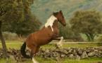 Coaching y Psicoterápia asistida con caballos